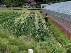 青果や野菜の販売・栽培に力を入れています!